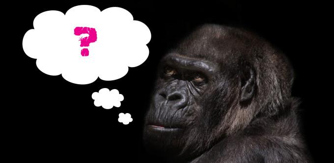 gorilla-845119_1920